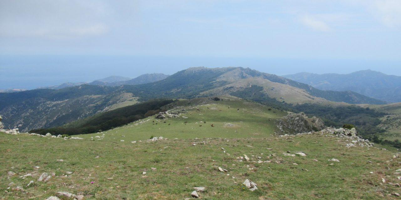 Puig Dels Quatre Termes 1110m à Vtt