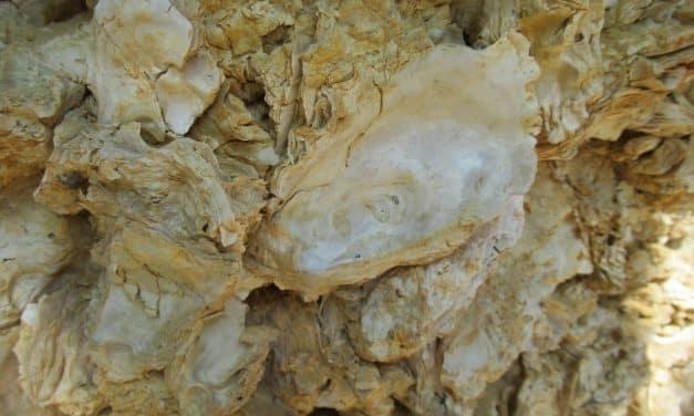 Fossiles de Sainte Croix du Mont
